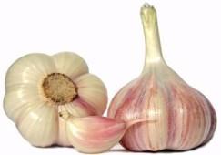 aglio contro la fibrosi cistica