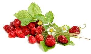 fragoline di bosco rimedio per l'ipertensione