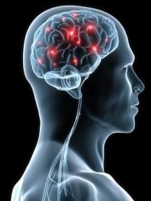 modificazioni al cervello da traumi e paure