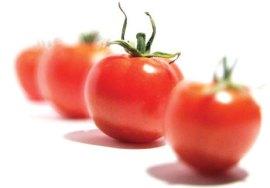 pomodoro salute