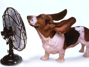 rimedi caldo eccessivo